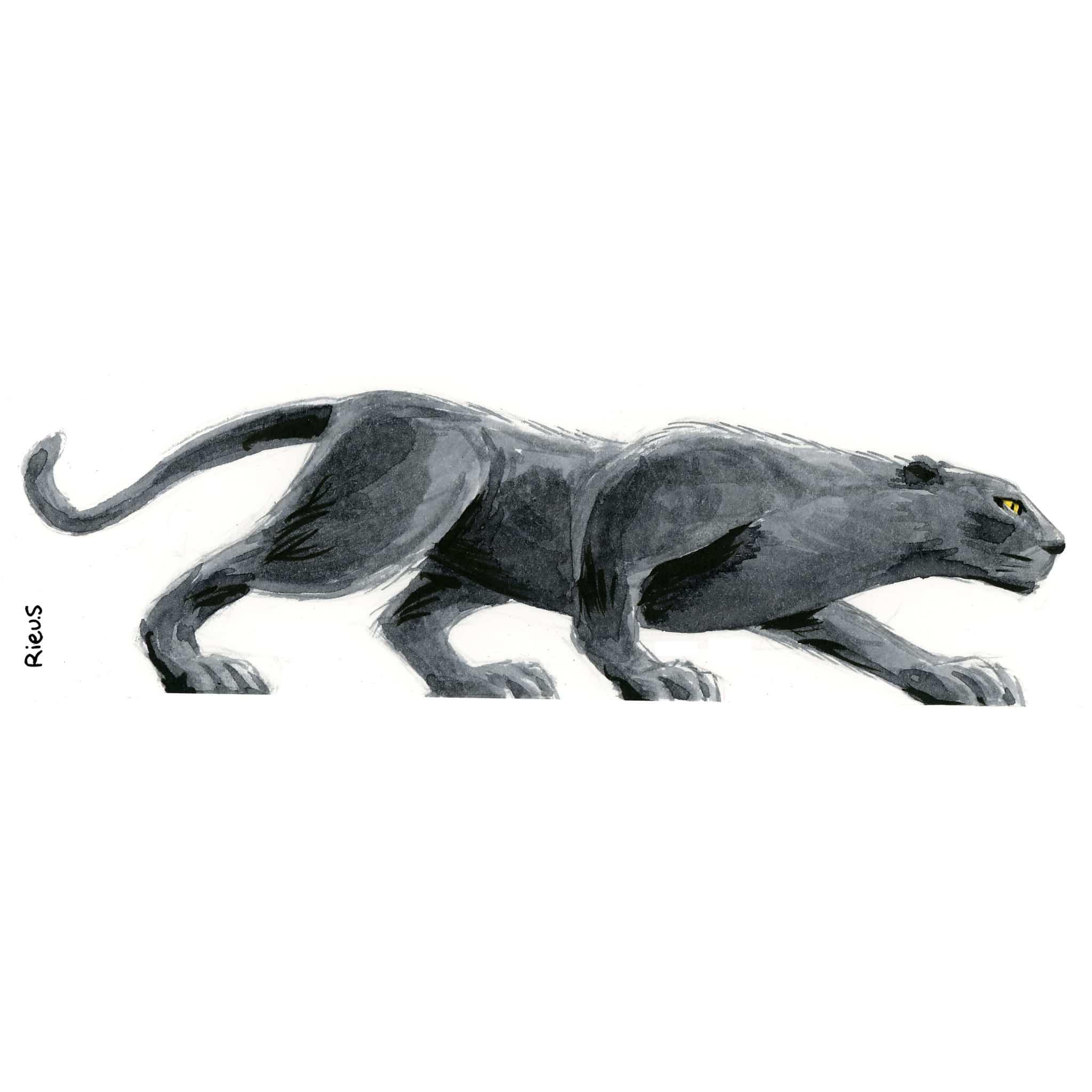 portrait d'animaux sauvage : la panthère noire