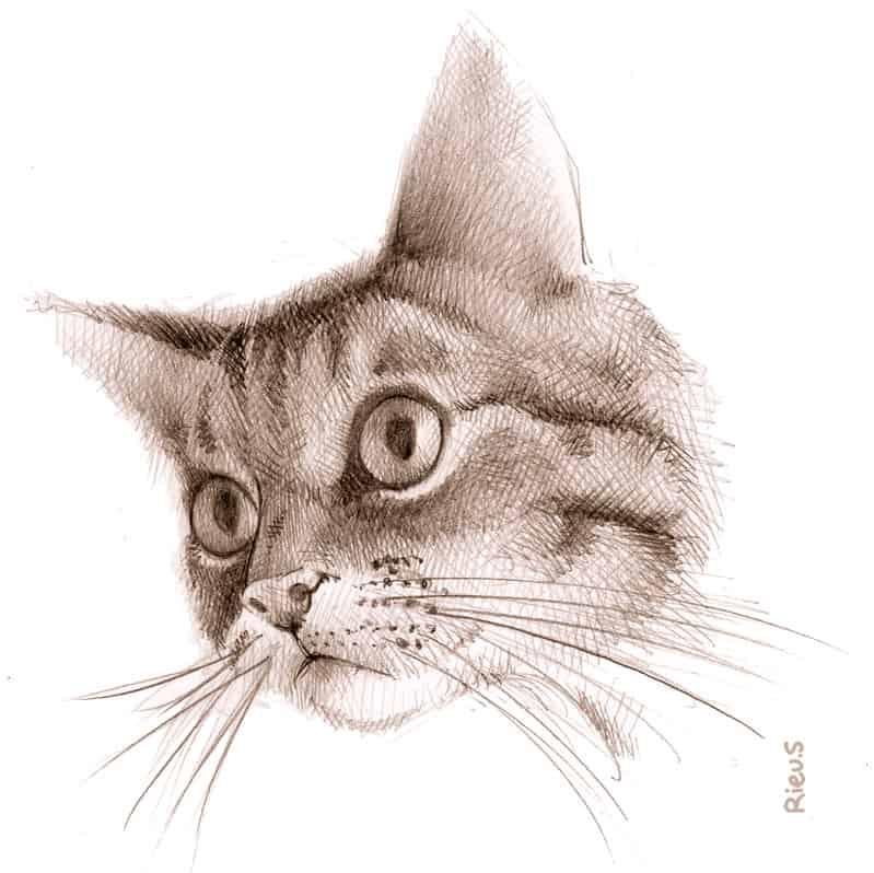 portrait d'animaux de compagnie: un chat