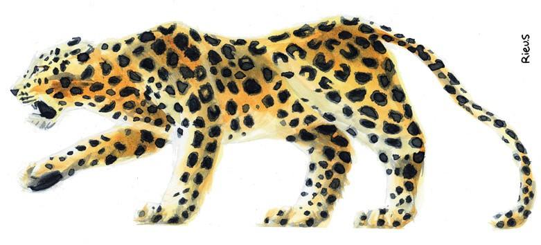 Aquarelle d'un animal sauvage : la panthere